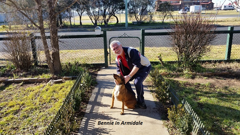 Bennie our Armidale dish licker