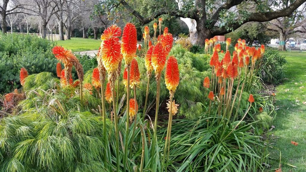 Benella gardens