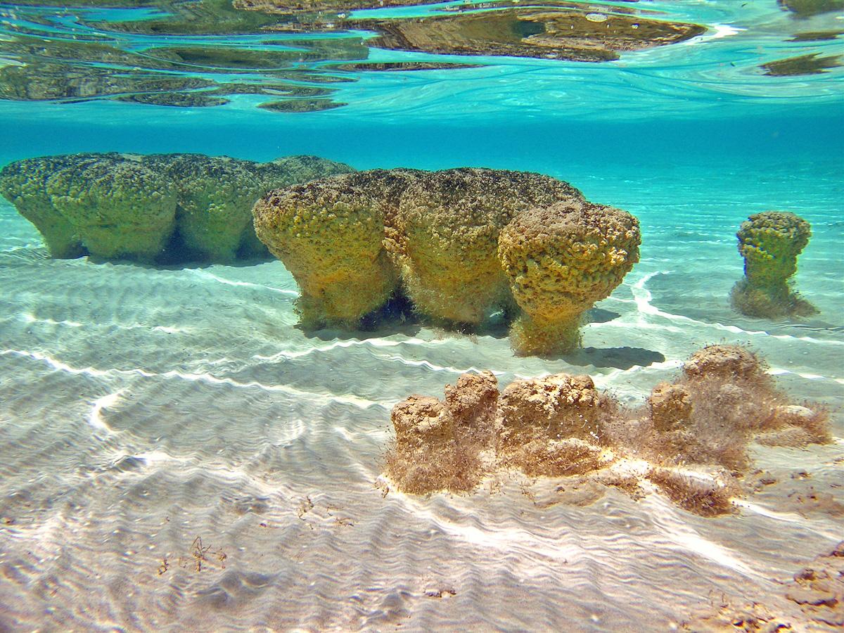 Stromatlites Shark Bay Australia